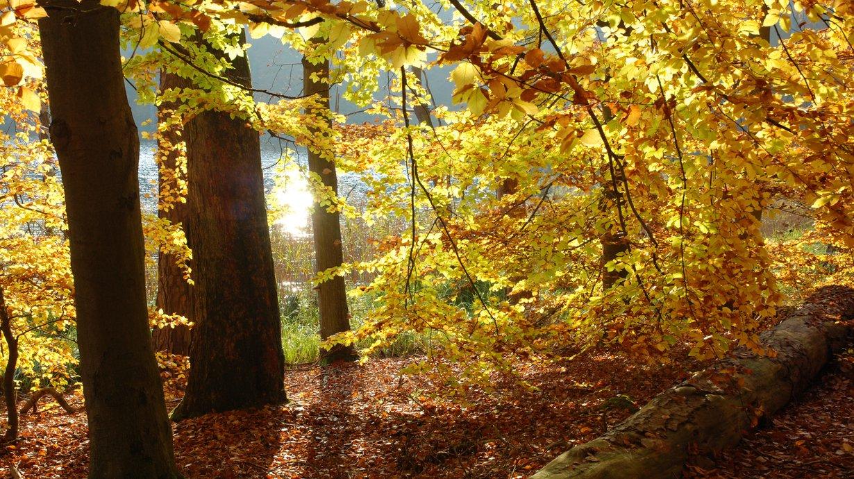 Buchenwälder Müritz-Nationalpark