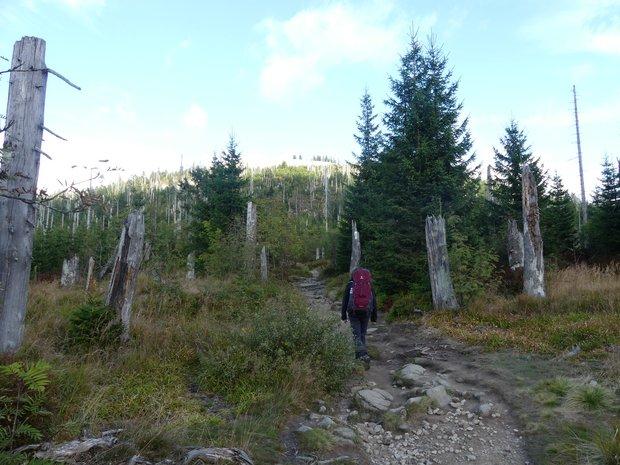 Man sieht Lea mit großem Rucksack von hinten auf einem Wanderweg im Wald