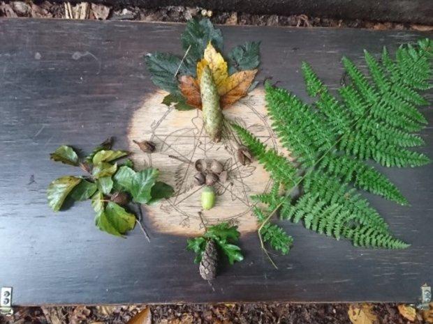 Foto der Pflanzenkiste