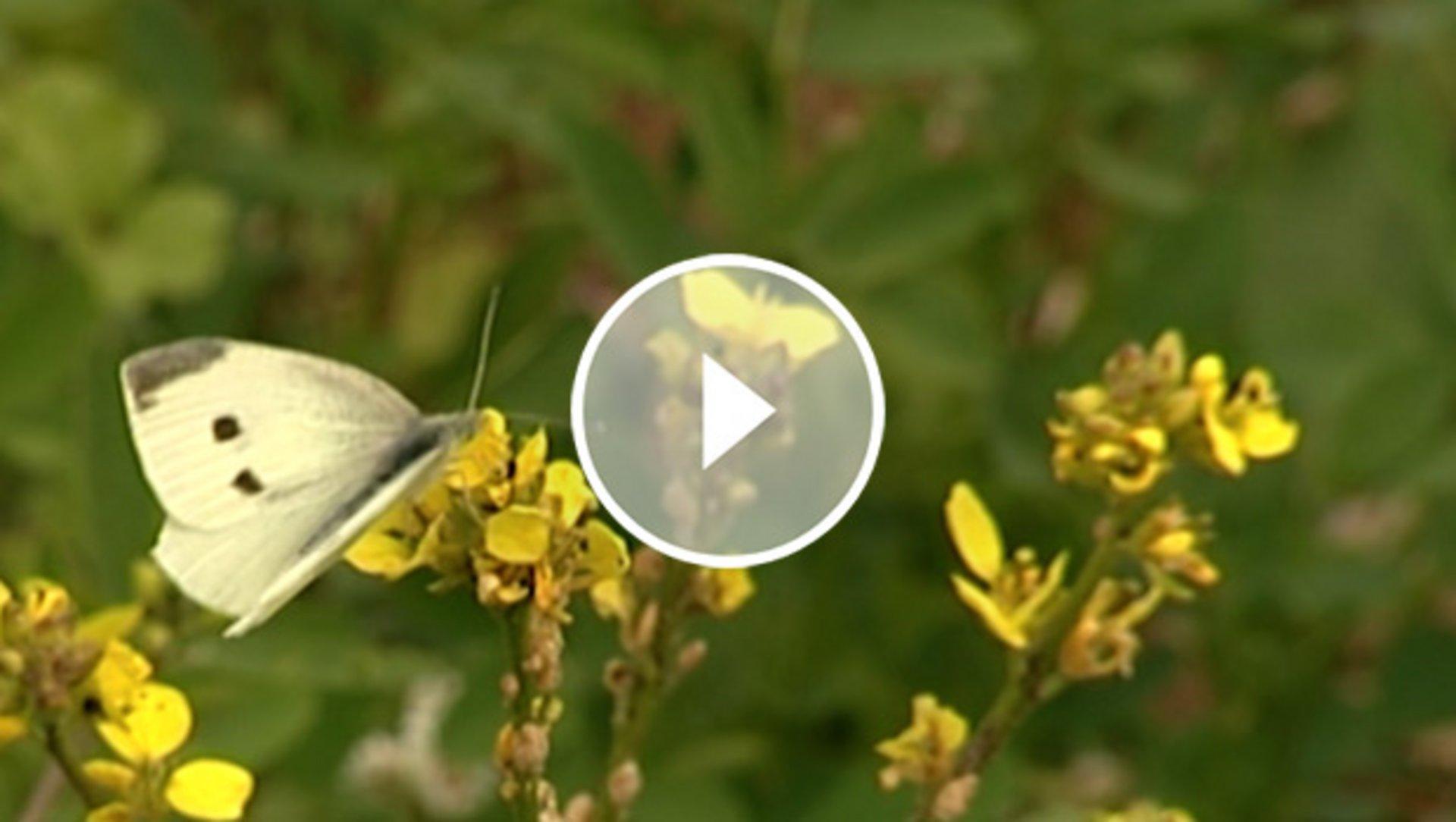 Bienenstrom und mehr