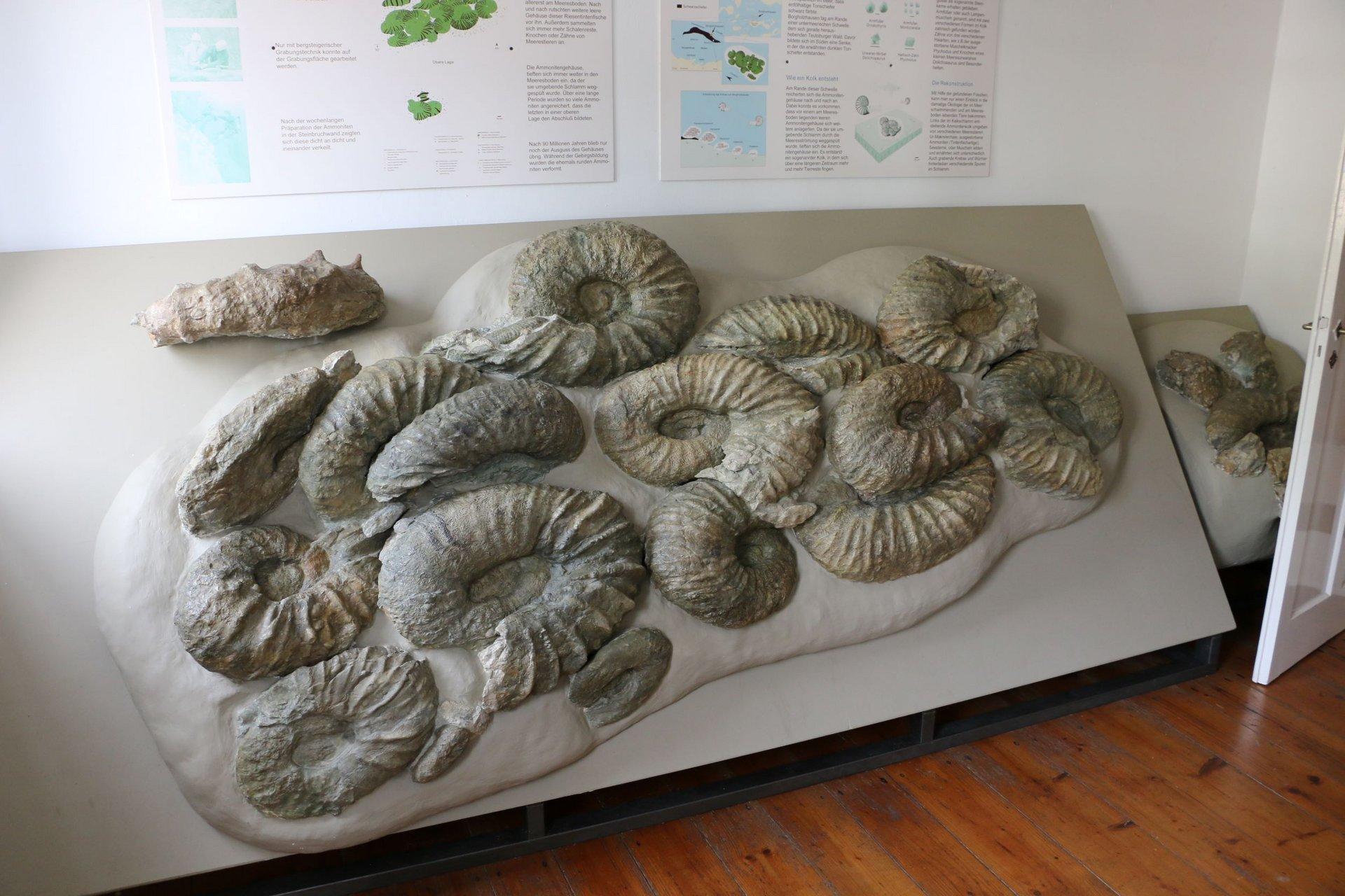 Bild von einer Ausstellungsfläche mit Riesenammoniten