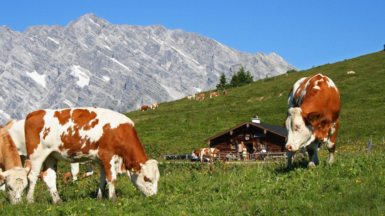 Bild: Nationalpark Bayerischer Wald