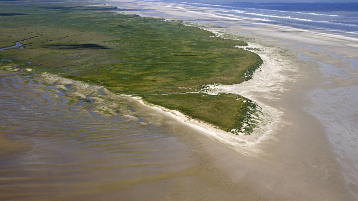 grünbewachsene Landzunge Nationalpark Niedersächsisches Wattenmeer