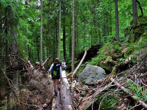 Mit dem Fachmann quer durch den Wald