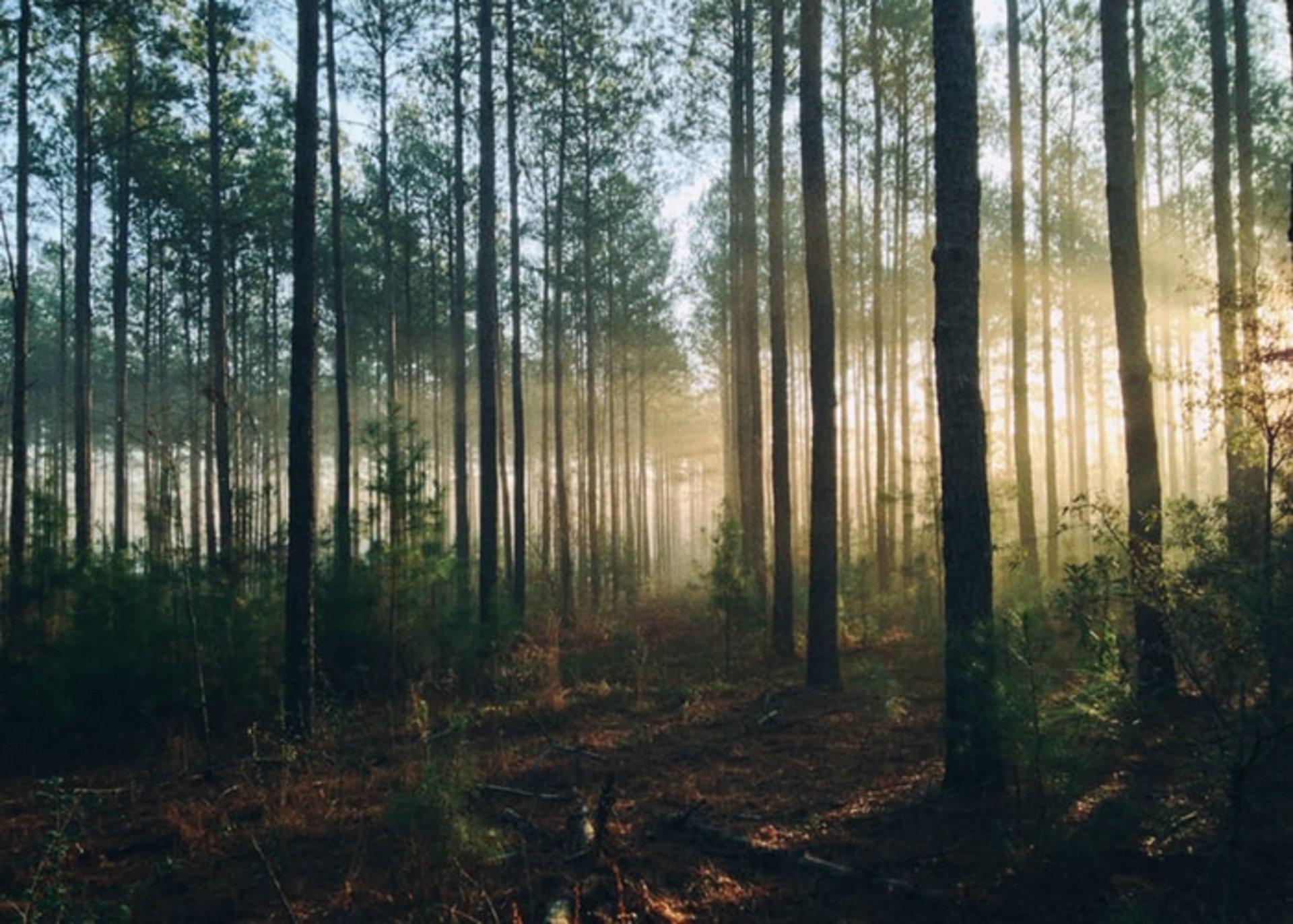 Dichter Wald mit Lichtreflektionen