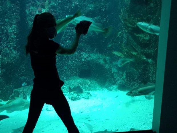 Morgendliches Putzen der großen Aquariumsfenster