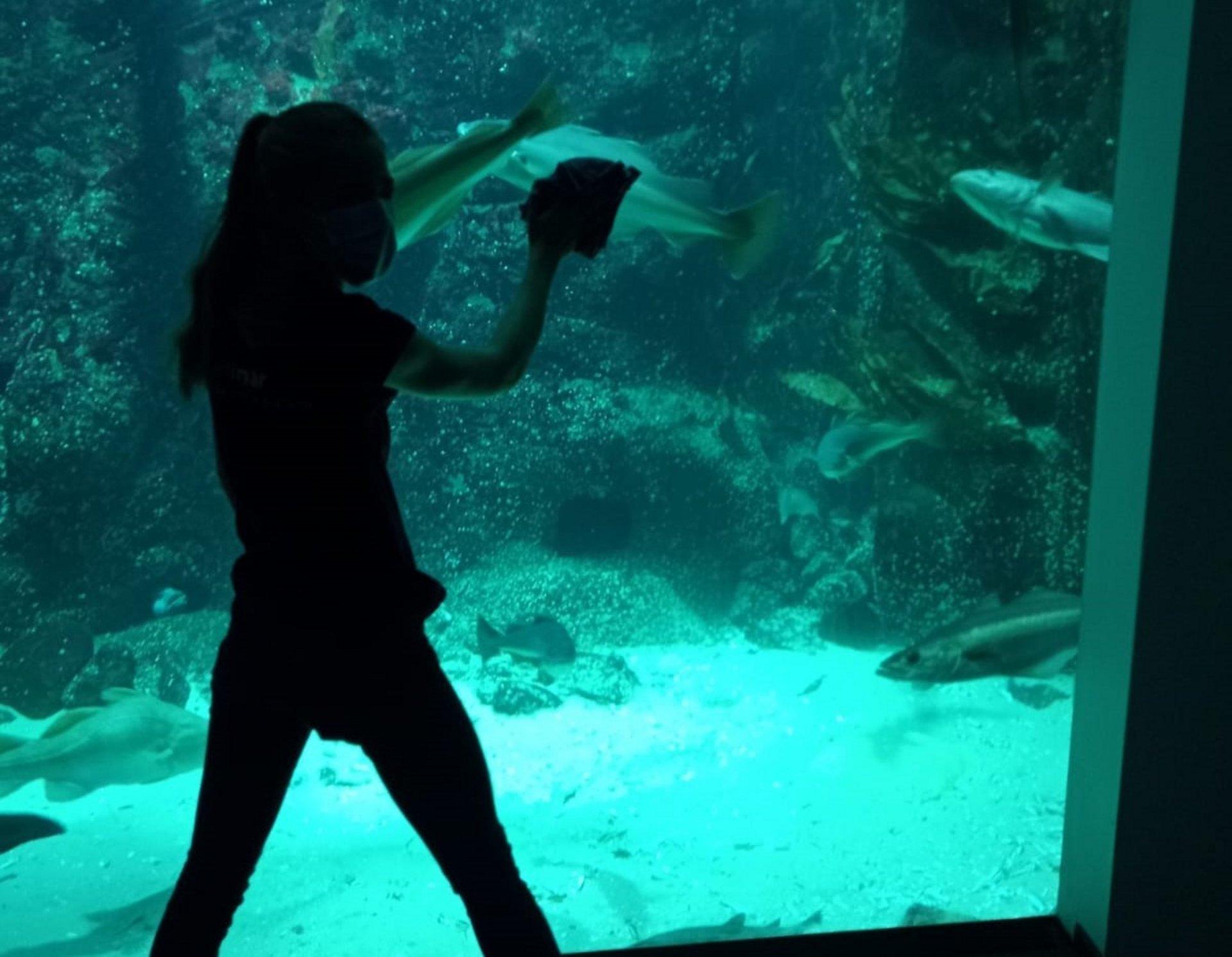 Blick in ein großes Aquarium