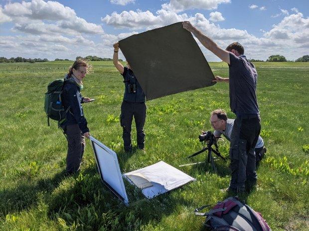 Vier junge Forscher:innen fotografieren die Vegetationsstrukturen auf einer Salzwiese