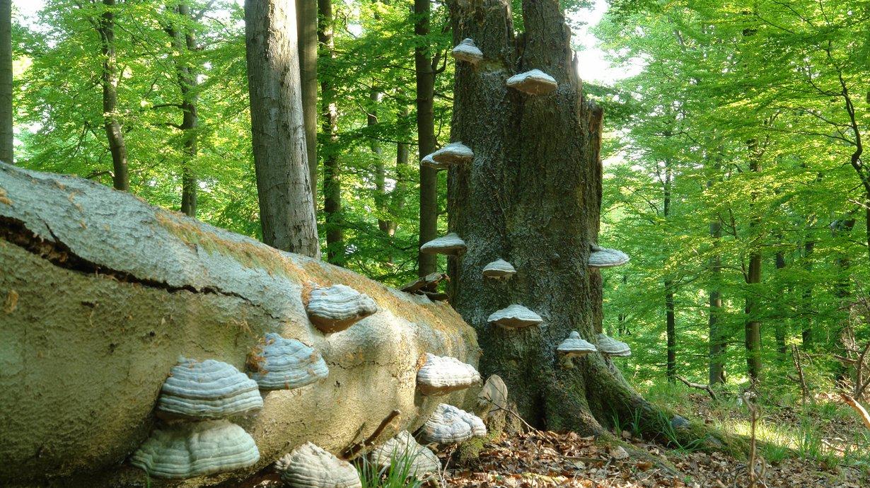 Bild: Nationalpark Kellerwald-Edersee