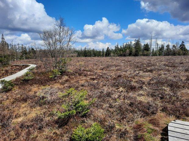 Blick übers Torfhausmoor