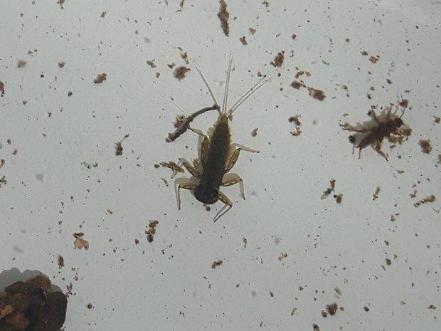 Wassertiere unterm Mikroskop (Foto: Larissa Jüttner)
