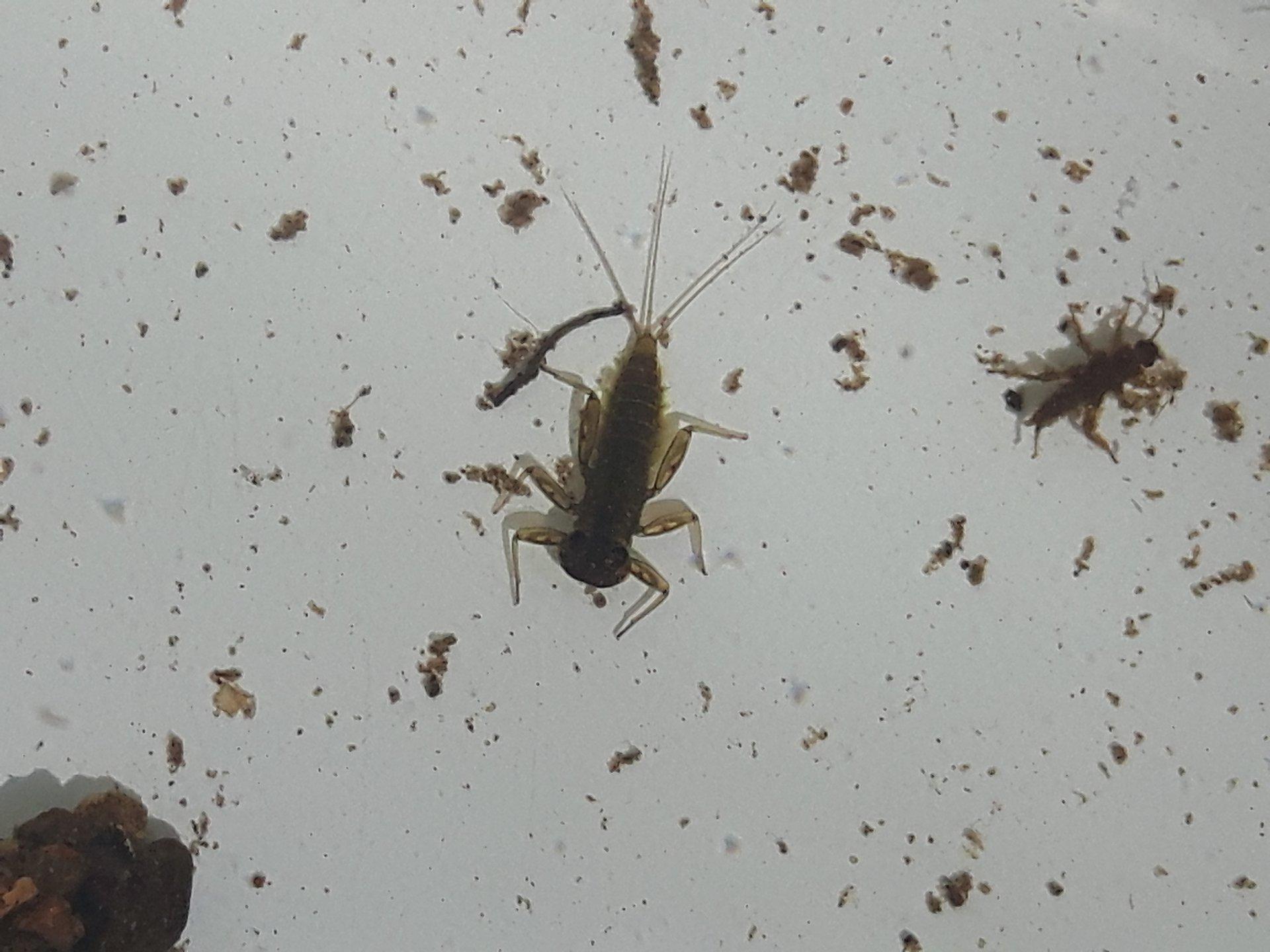 Gewässertiere unterm Mikroskop (Foto Larissa Jüttner)