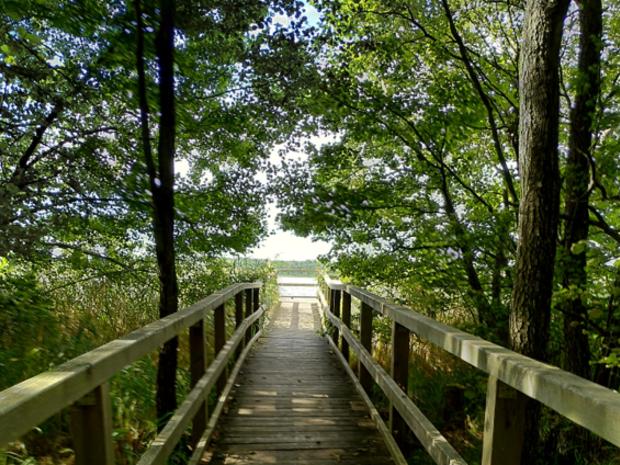 Holzsteg führt in See