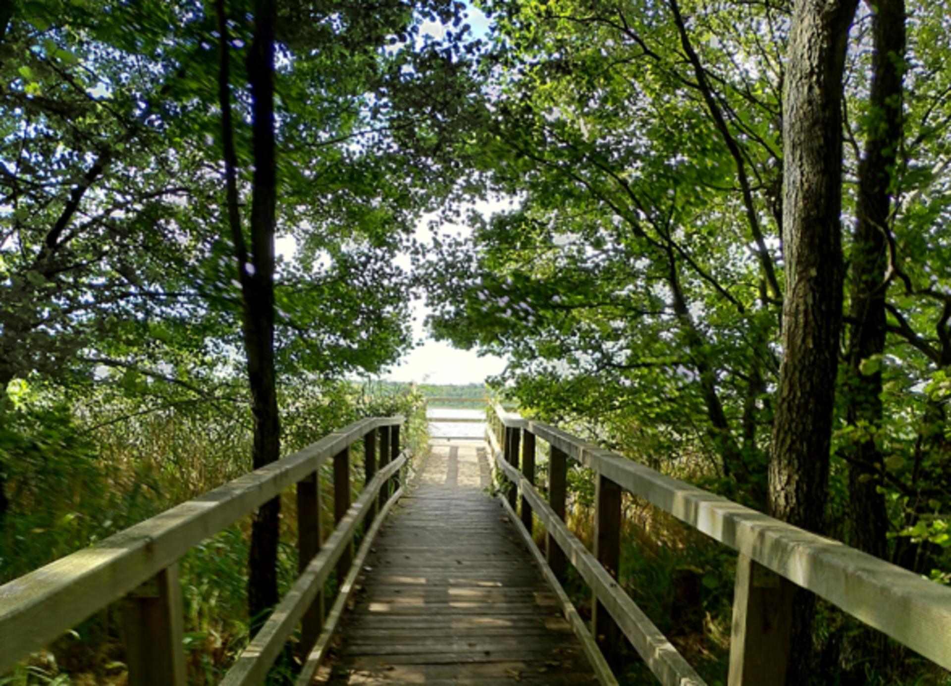 Holzsteg und See