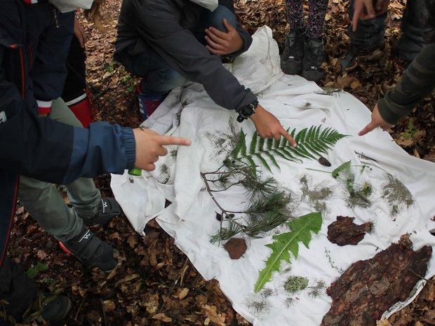 Kinder suchen bestimmte Materialien in der Natur