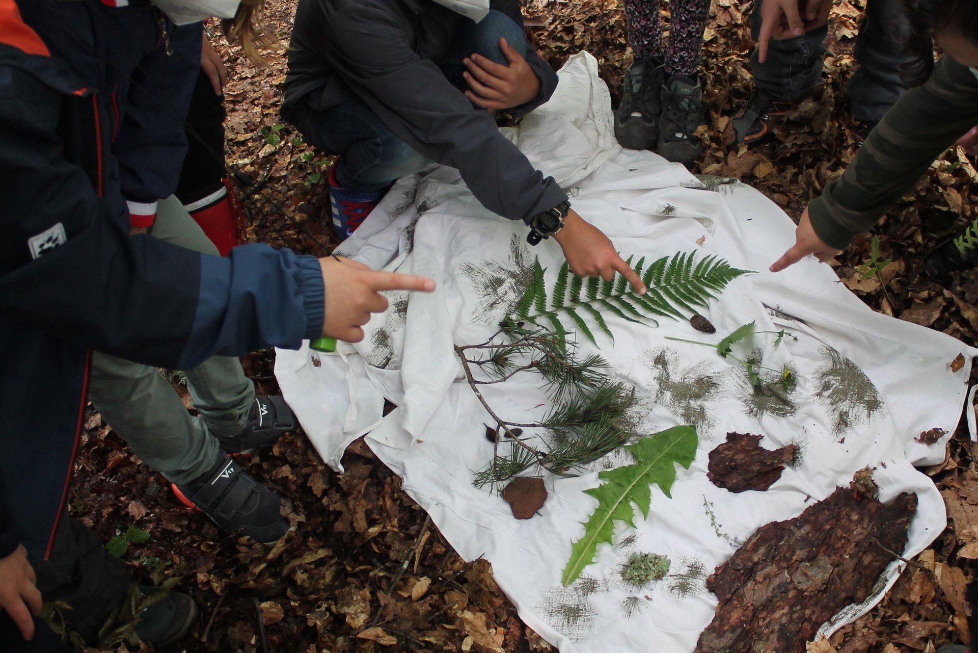 Kinder erkunden den Wald (Foto Anneke Hoppe)