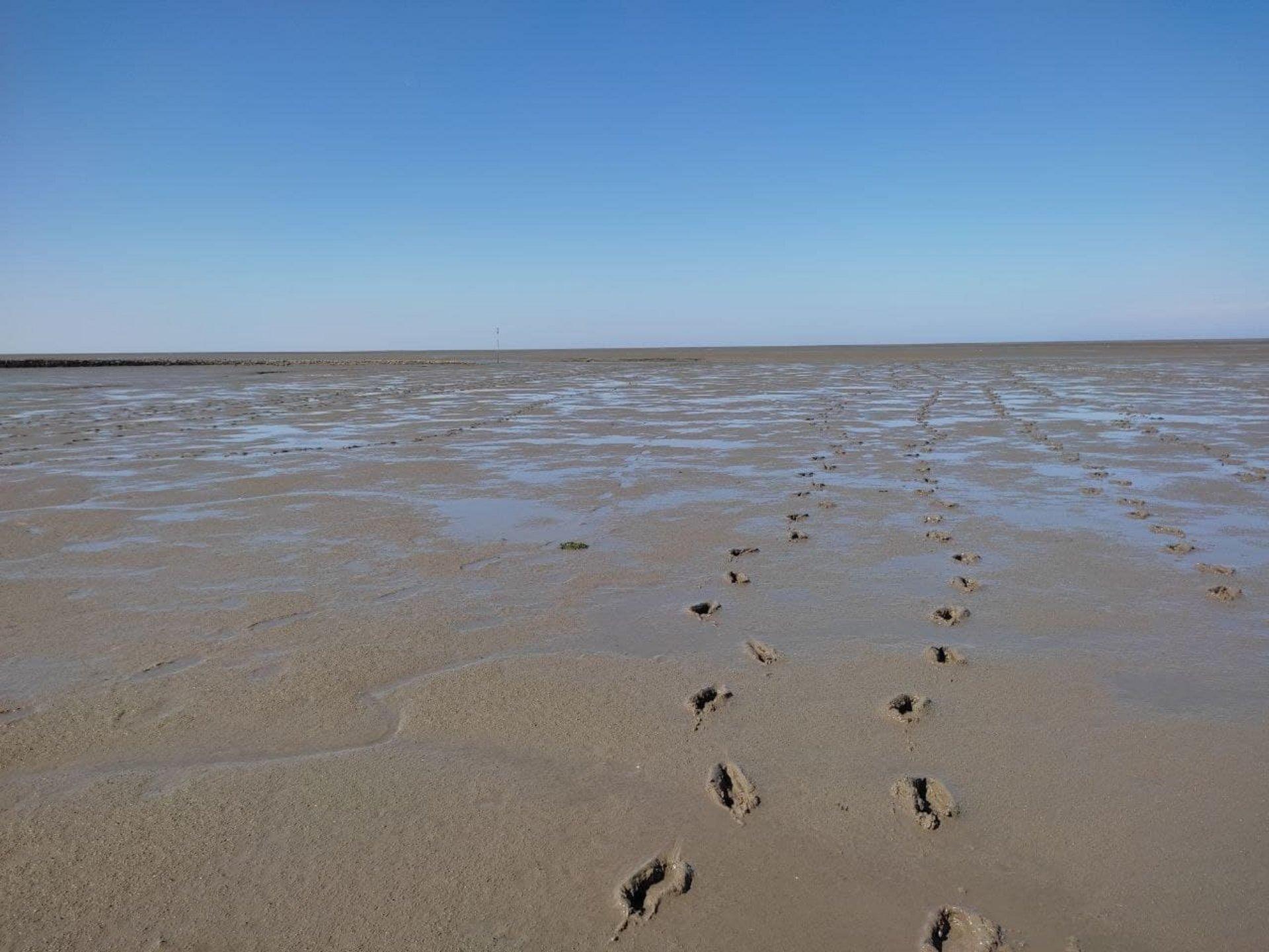 Fußspuren im endlosen Watt (Foto Johanna Böttcher)
