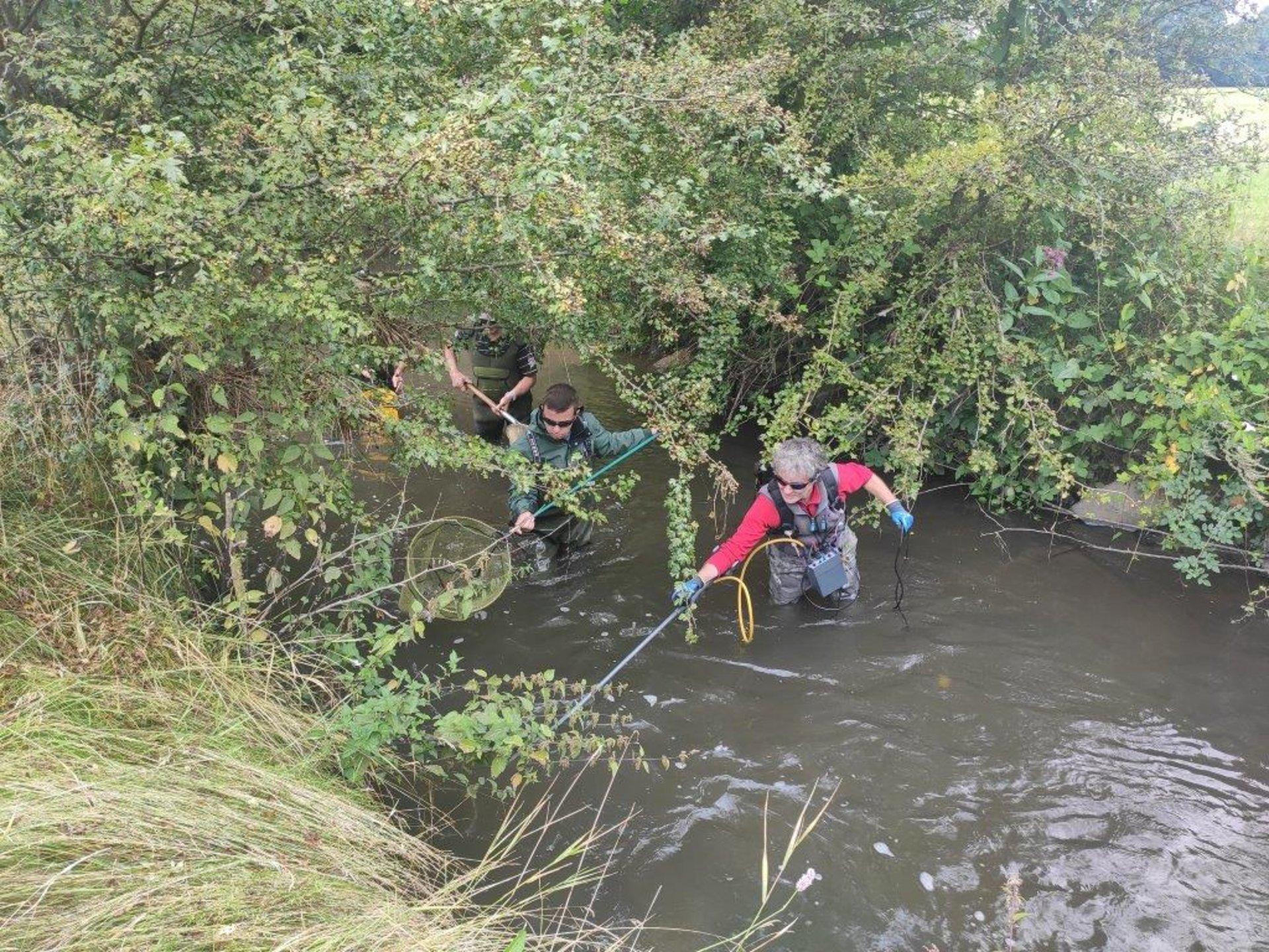 Menschen beim Elektrofischen im Fluss