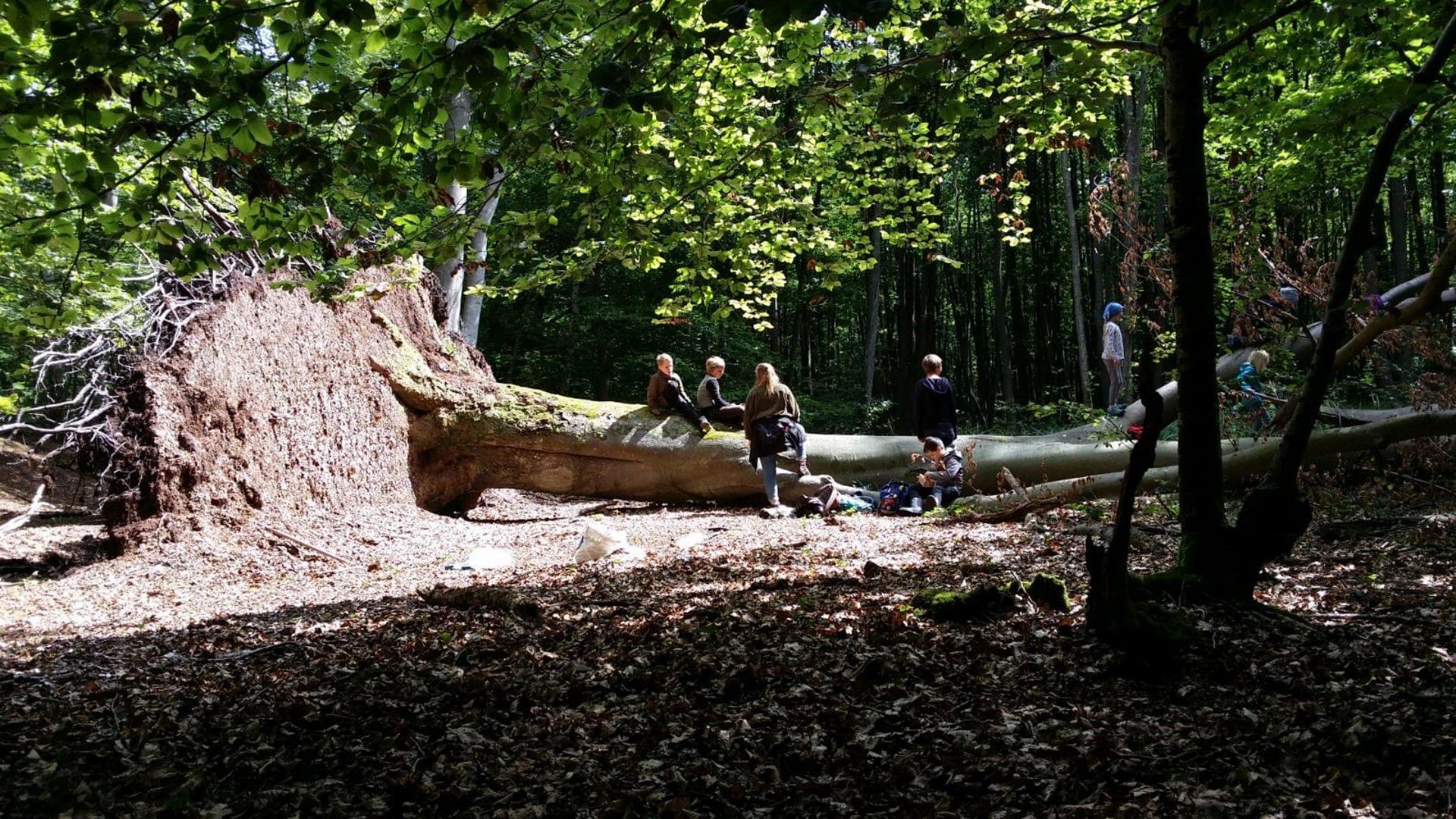 Kinder spielen auf umgestürztem Baum